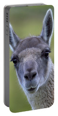 Guanaco Portable Battery Charger by Tony Beck