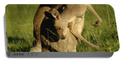 Kangaroos Taking A Bow Portable Battery Charger by Bob Christopher