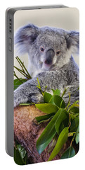 Koala On Top Of A Tree Portable Battery Charger by Chris Flees