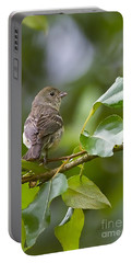 Lazuli Bunting Female 2 Portable Battery Charger by Sharon Talson