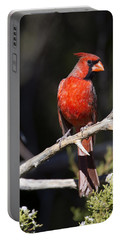 Male Northern Cardinal Portable Battery Charger by Gary Langley