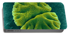 Portable Battery Charger featuring the photograph Micrasterias Angulosa, Algae, Sem by Science Source