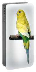 Parakeet Portable Battery Charger by Aaron Haupt
