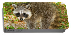 Raccoon Portable Battery Charger by Millard H Sharp