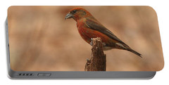 Red Crossbill Portable Battery Charger by Charles Owens