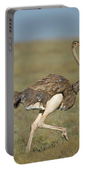 Side Profile Of An Ostrich Running Portable Battery Charger by Panoramic Images