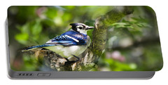 Spring Blue Jay Portable Battery Charger by Christina Rollo