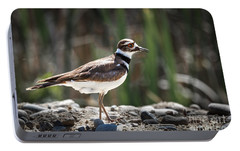 The Killdeer Portable Battery Charger by Robert Bales