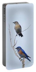 Western Bluebird Pair Portable Battery Charger by Mike  Dawson