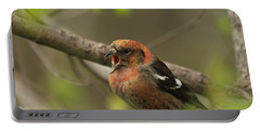 White-winged Crossbill Portable Battery Charger by James Peterson