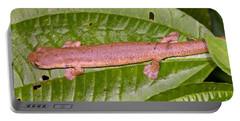Bolitoglossine Salamander Portable Battery Charger by Dante Fenolio