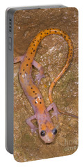 Cave Salamander Portable Battery Charger by Dante Fenolio
