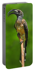 African Grey Hornbill Portable Battery Charger by Tony Beck