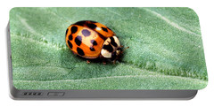 Asian Multicolored Lady Beetle Portable Battery Charger by Science Source