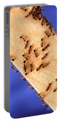 Fire Ants Portable Battery Charger by Science Source