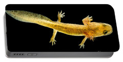 California Giant Salamander Larva Portable Battery Charger by Dant� Fenolio