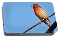 American Crossbill On Wire     Spring   Indiana   Portable Battery Charger by Rory Cubel