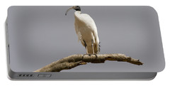 Australian White Ibis Perched Portable Battery Charger by Mike  Dawson