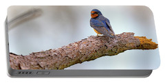 Barn Swallow On Assateague Island Portable Battery Charger by Rick Berk