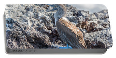Blue Footed Booby Portable Battery Charger by Jess Kraft