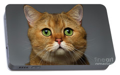 Closeup Golden British Cat With  Green Eyes On Gray Portable Battery Charger by Sergey Taran