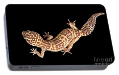 Closeup Leopard Gecko Eublepharis Macularius Isolated On Black Background Portable Battery Charger by Sergey Taran