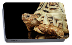 Closeup Leopard Tortoise Albino,stigmochelys Pardalis Turtle With White Shell On Isolated Black Back Portable Battery Charger by Sergey Taran