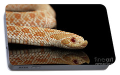 Closeup Pink Pastel Albino Western Hognose Snake, Heterodon Nasicus Isolated On Black Background Portable Battery Charger by Sergey Taran