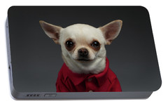 Closeup Portrait Chihuahua Dog In Stylish Clothes. Gray Background Portable Battery Charger by Sergey Taran