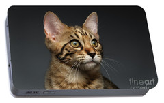 Closeup Portrait Of Bengal Male Kitty On Dark Background Portable Battery Charger by Sergey Taran
