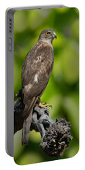 Common Buzzard Buteo Buteo, Bandhavgarh Portable Battery Charger by Panoramic Images
