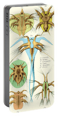 Copepods, Nauplius Larvae Portable Battery Charger by Science Source
