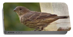 Crossbill Female Portrait      September    Indiana Portable Battery Charger by Rory Cubel