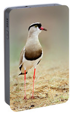 Crowned Lapwing Portrait Portable Battery Charger by Etienne Outram