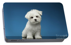 Cute Pure White Maltese Puppy Standing And Curiously Looking In Camera Isolated On Blue Background Portable Battery Charger by Sergey Taran