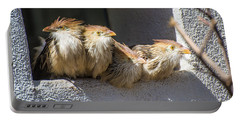 Four Stooges - Guira Cuckoos Portable Battery Charger by Gary Whitton