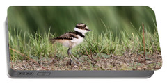 Killdeer - 24 Hours Old Portable Battery Charger by Travis Truelove
