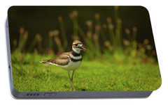 Killdeer Portable Battery Charger by Karol Livote