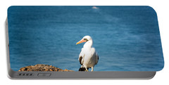 Nazca Booby On A Rock Portable Battery Charger by Jess Kraft