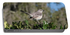 Northern Mockingbird Portable Battery Charger by Carol Groenen