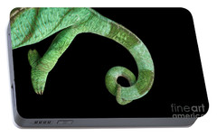 Parson Chameleon, Calumma Parsoni On Black Background, Top View Portable Battery Charger by Sergey Taran