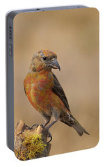 Red Crossbill Portable Battery Charger by Doug Herr