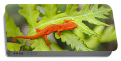 Red Eft Eastern Newt Portable Battery Charger by Christina Rollo