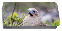 Red Footed Booby Closeup Portable Battery Charger by Jess Kraft