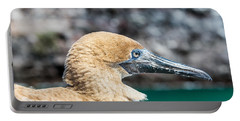 Red Footed Booby Juvenile Portable Battery Charger by Jess Kraft