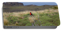 Red Long-tailed Medowlark Bird, Patagonia, National Park Torres Del Paine, Chile. Portable Battery Charger by Anna Soelberg