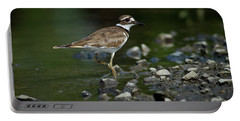 Killdeer  Portable Battery Charger by Douglas Stucky