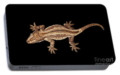 Top View Of Gargoyle Gecko, Rhacodactylus Auriculatus Staring Isolated On Black Background. Native T Portable Battery Charger by Sergey Taran