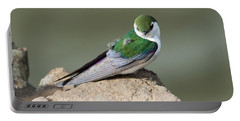 Violet-green Swallow Portable Battery Charger by Mike Dawson