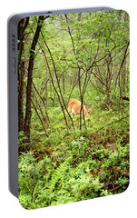 Portable Battery Charger featuring the photograph White-tailed Deer In A Misty, Pennsylvania Forest by A Gurmankin